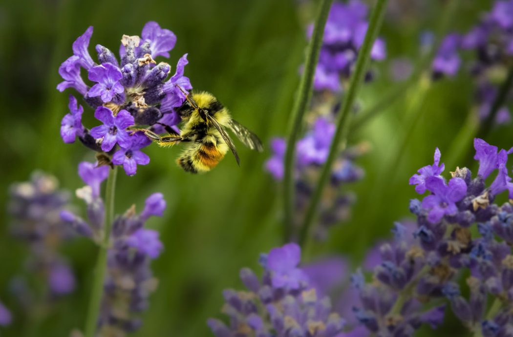 all year round plants for bees
